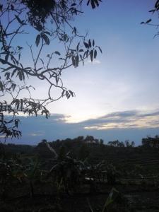 pemandangan di pagi buta